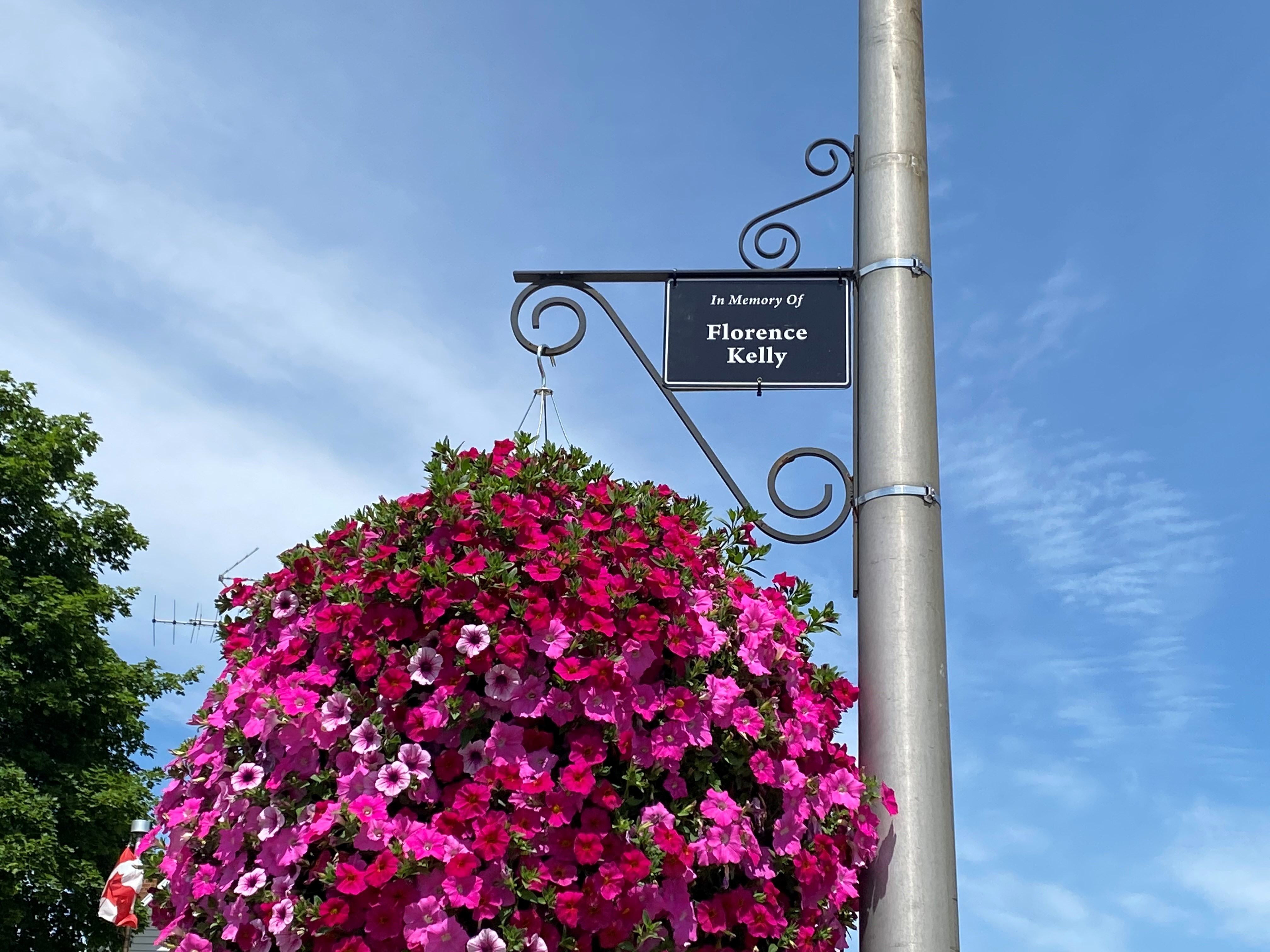 hanging basket with sign